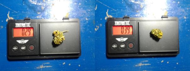 Messung 3: Messung der Endgewichte