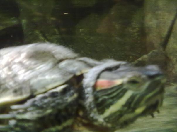 Sie hat alles gesehen und schweigt - Easy, die Schildkröte aus dem Easy Going - Photo by Antonio Peri